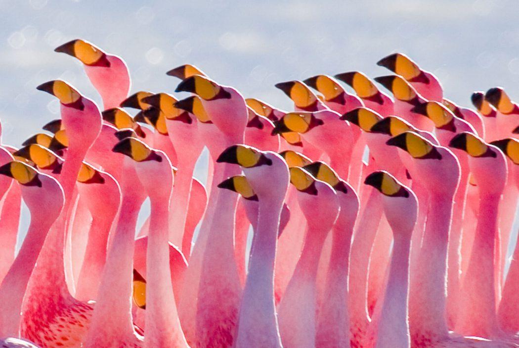 family-flamingos-uhd-image